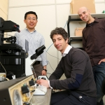 Preventing deformed limbs: researchers find new link between physical forces and limb development