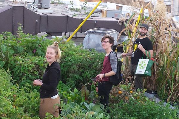 Tina Hale, Ileea Larente and Matt Stata harvesting vegetables in the Sky Garden
