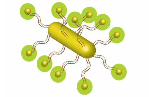 nanoparticle made of gold and DNA