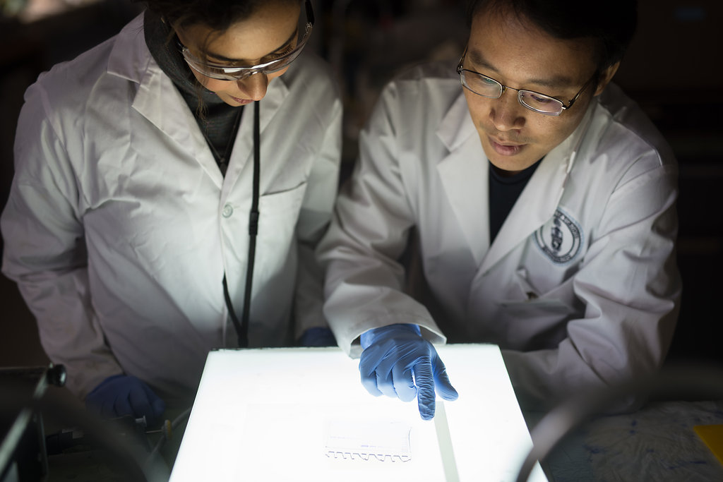 Maryam Arefmanesh (ChemE PhD candidate) and Thu Vuong, a postdoctoral fellow in Professor Emma Mater's lab, examine a protein gel showing enzymes cultured from microorganisms that degrade wood. By studying these enzymes, the team hopes to develop new materials from trees that could replace those made from fossil fuels. (Photo: Sean Caffrey)