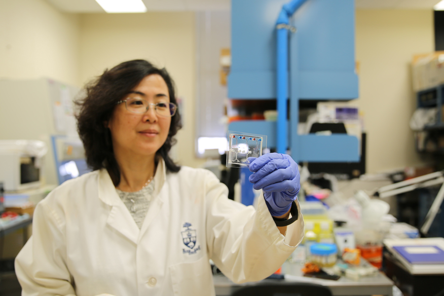 Lidan You and hear team design microfluidic devices for earlier diagnosis of diseases such as cancer. (Photo: Liz Do)