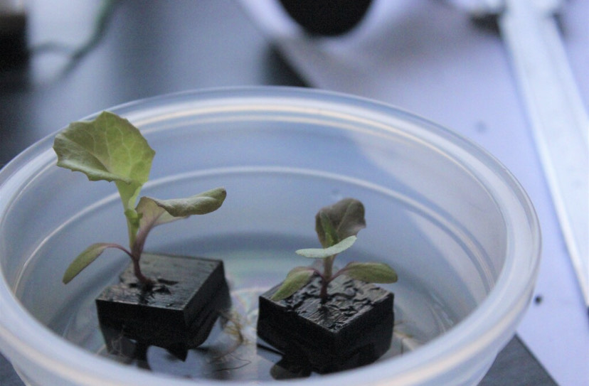 The Indus team is replicating the physical properties that enable root vegetables to thrive in hydroponic systems. (Photo: Patrick Diep)