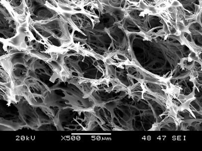 An image of the polymer foam taken with a scanning electron microscope. The large surface area is ideal for absorbing oil droplets from oil sands wastewater. (Image: Park et al., 2014)